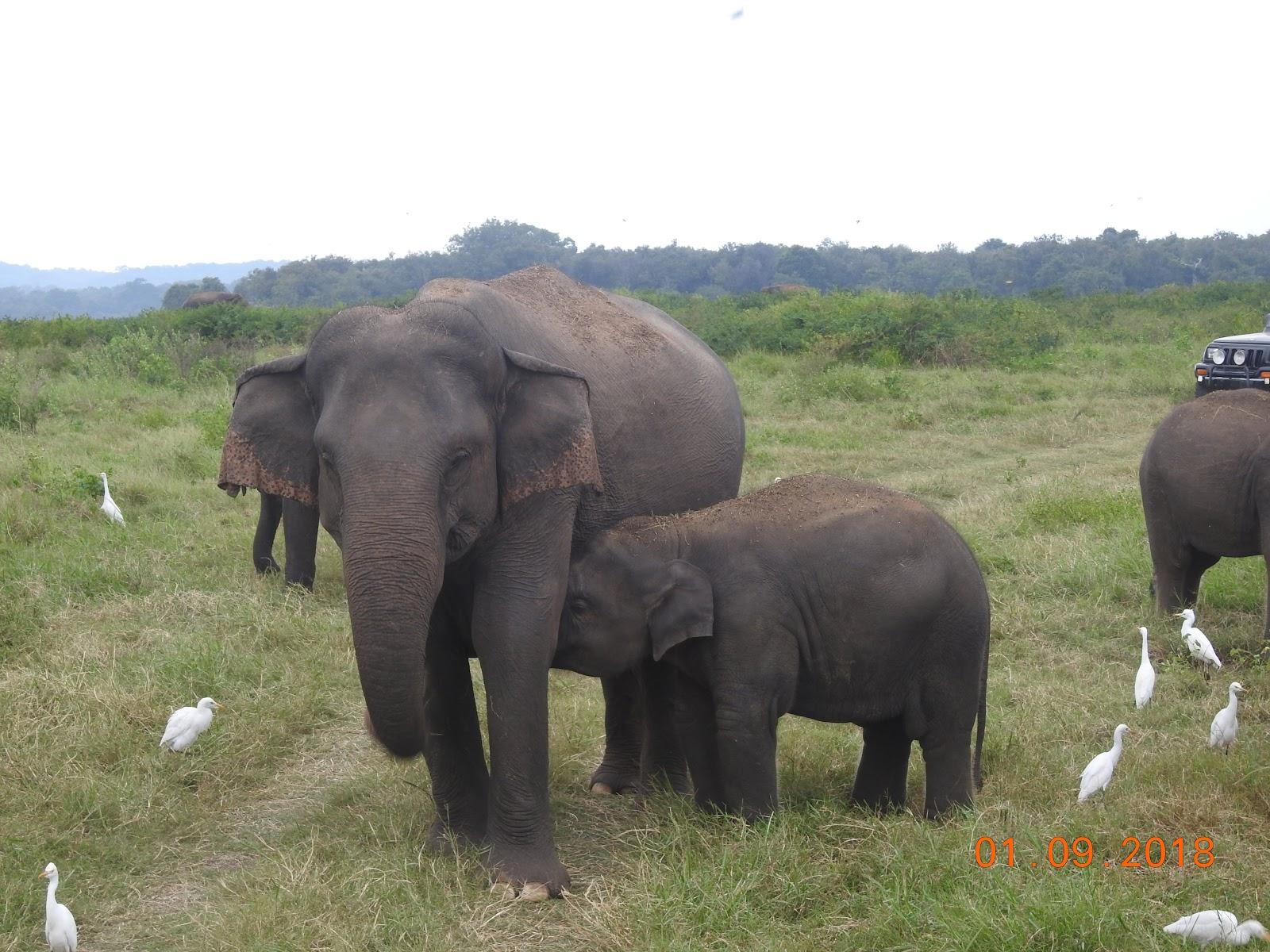 invite-to-paradise-sri-lanka-maldives-holiday-specialists-nutan-vidyut-patel-elephants-4.jpg