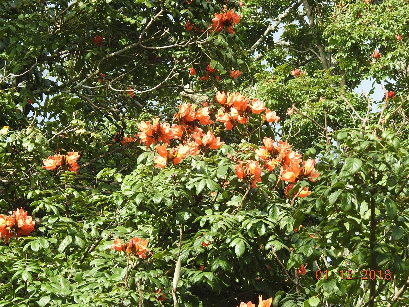 invite-to-paradise-sri-lanka-maldives-holiday-specialists-nutan-vidyut-patel-flora.jpg