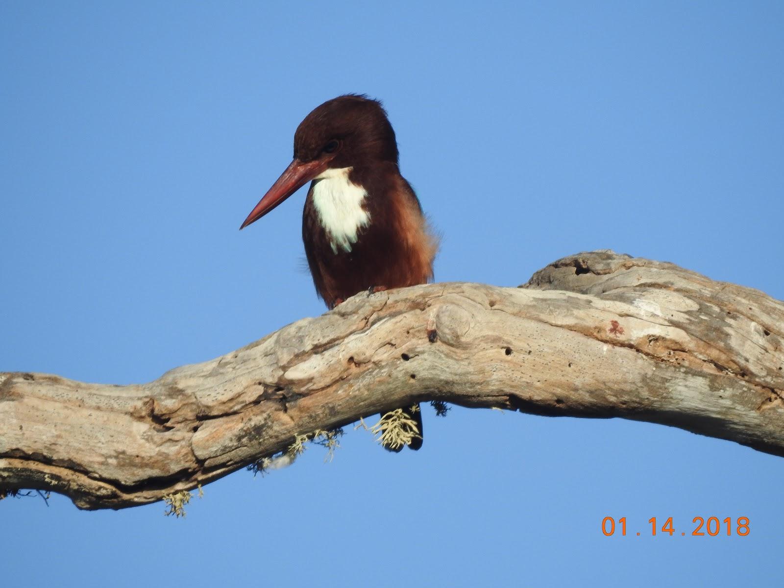 invite-to-paradise-sri-lanka-maldives-holiday-specialists-nutan-vidyut-patel-kingfisher.jpg