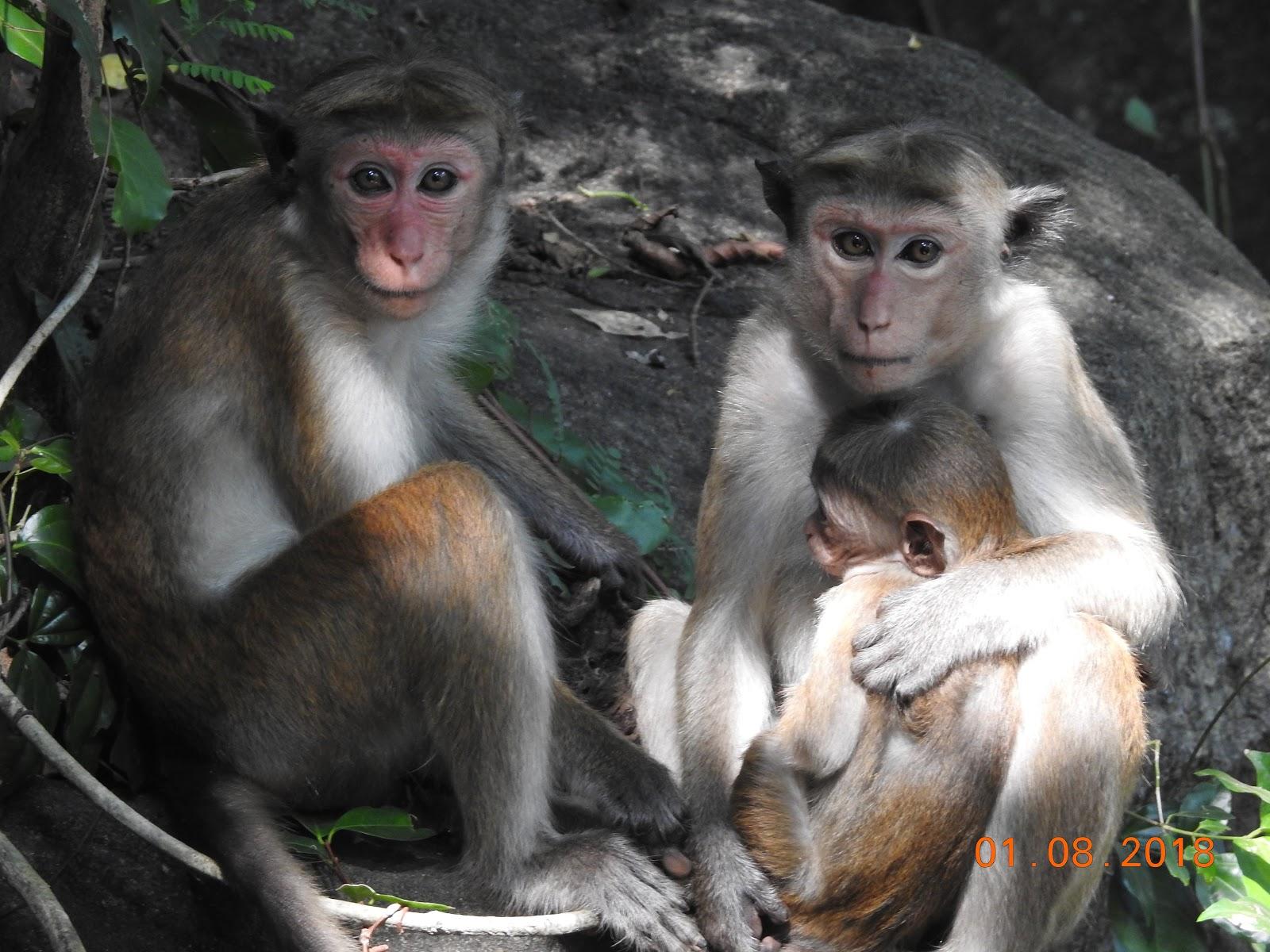 invite-to-paradise-sri-lanka-maldives-holiday-specialists-nutan-vidyut-patel-monkeys.jpg
