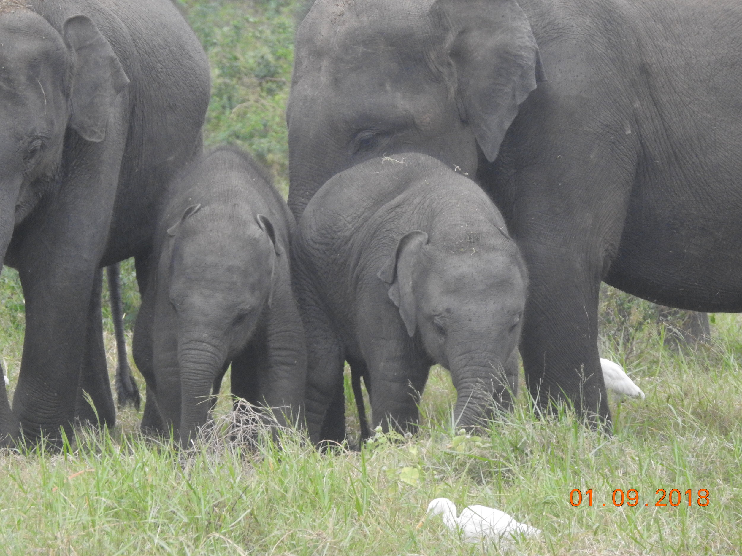 invite-to-paradise-sri-lanka-maldives-holiday-specialists-nutan-vidyut-patel-elephants-1.JPG