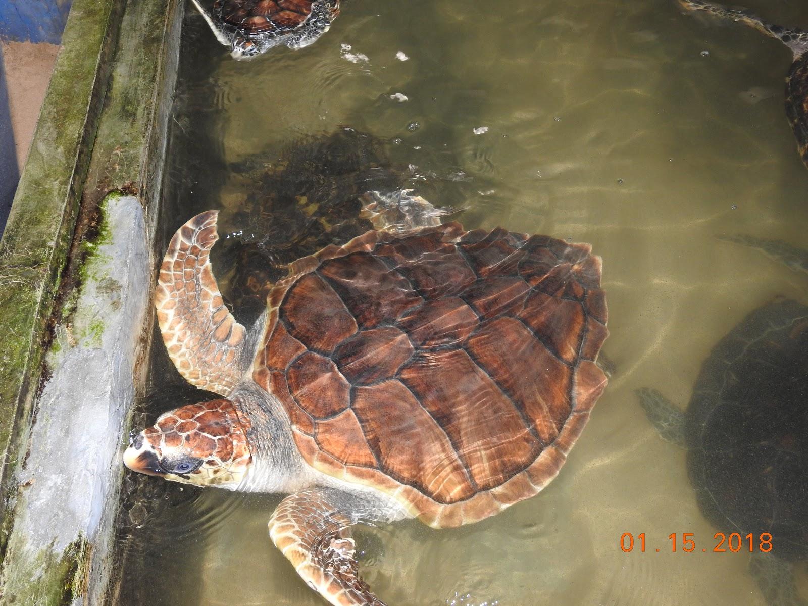 invite-to-paradise-sri-lanka-maldives-holiday-specialists-nutan-vidyut-patel-turtle.jpg