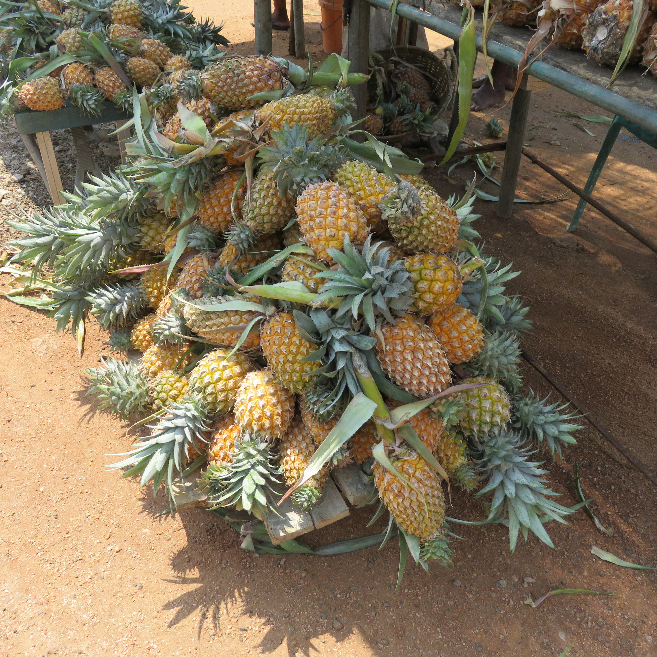 invite-to-paradise-sri-lanka-specialists-thomas-family-holiday-tour-pinapples.JPG