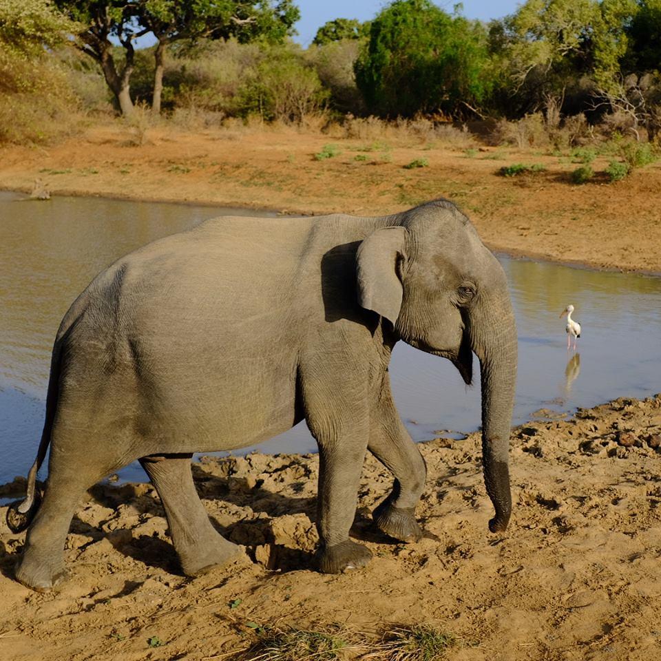 invite-to-paradise-sri-lanka-maldives-holiday-honeymoon-specialists-customer-feedback-matthew-hannah-fordham-yala-elephant.jpg