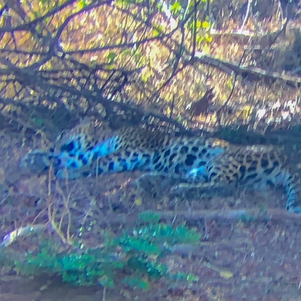 invite-to-paradise-sri-lanka-maldives-holiday-honeymoon-specialists-customer-feedback-matthew-hannah-fordham-yala-leopard.jpg