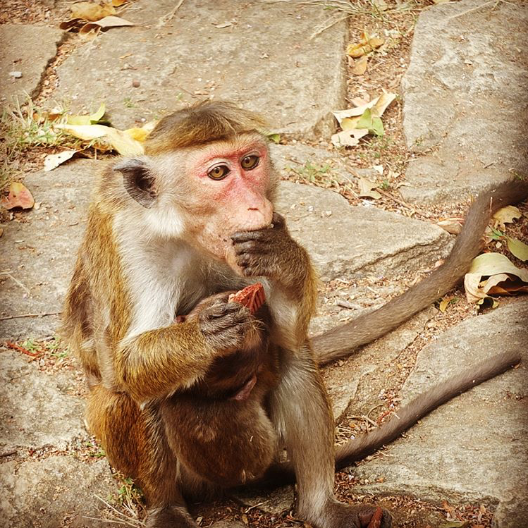 invite-to-paradise-sri-lanka-maldives-holiday-honeymoon-specialists-customer-feedback-edward-bethan-monkey.PNG