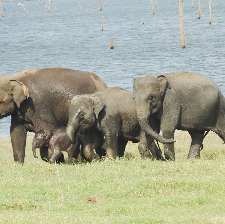 invite-to-paradise-sri-lanka-maldives-holiday-honeymoon-specialists-customer-feedback-edward-bethan-elephant-wildlife-jeep-safari-1.PNG