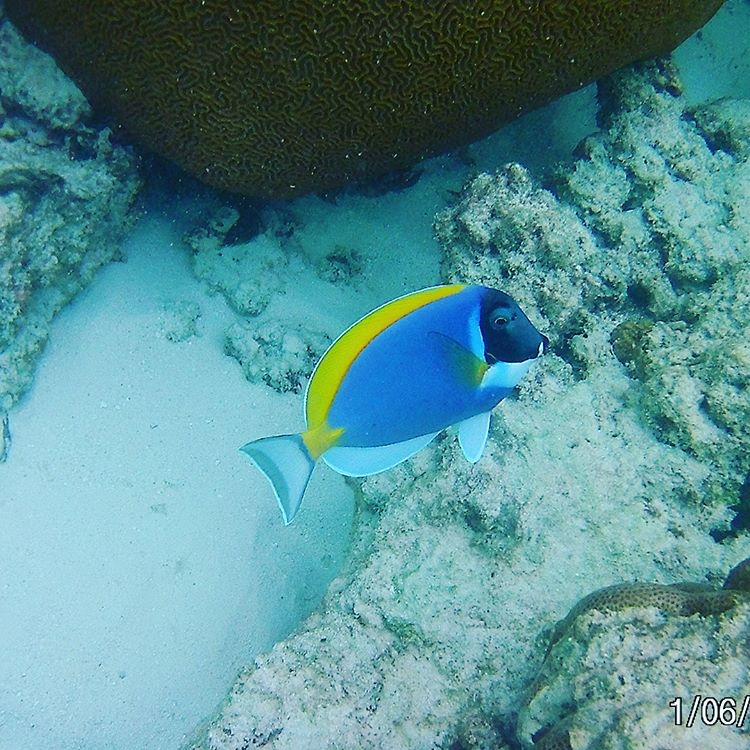 invite-to-paradise-sri-lanka-maldives-holiday-honeymoon-specialists-customer-feedback-edward-bethan-oblu-by-atmoshpere-at-helengeli-snorkel.PNG