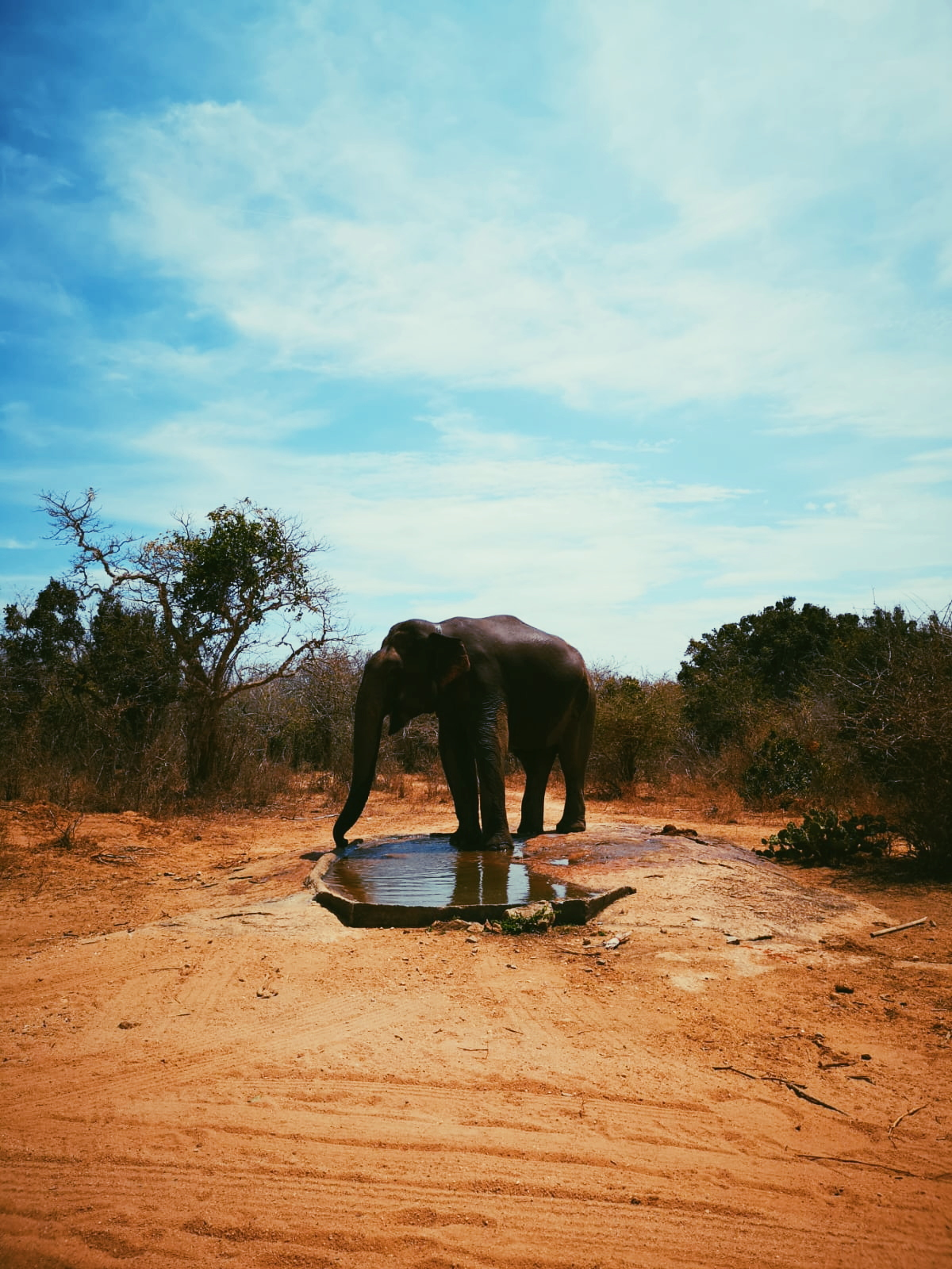 invite-to-paradise-sri-lanka-holiday-honeymoon-specialists-customer-feedback-elin-jordan-luce-yala-beach-wild-elephant.JPG