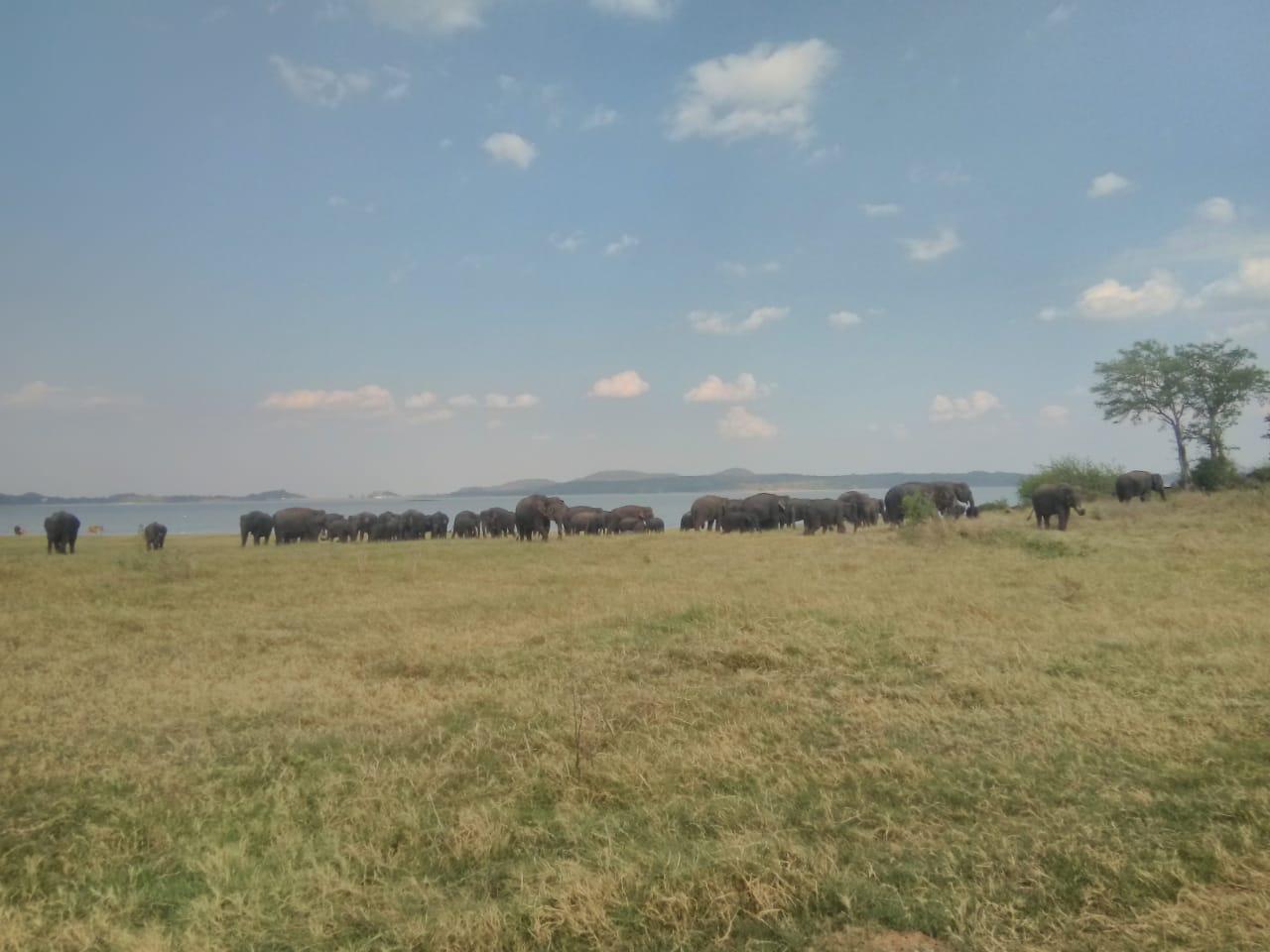 invite-to-paradise-sri-lanka-holiday-honeymoon-specialists-customer-feedback-elin-jordan-luce-wildlife-safari-elephants-1.JPG