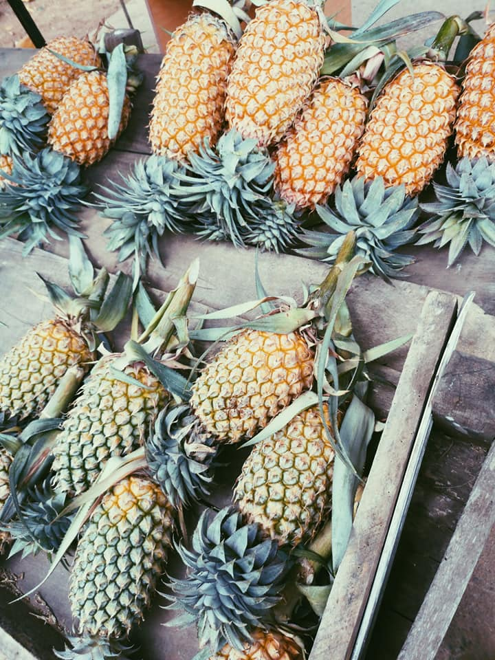 invite-to-paradise-sri-lanka-holiday-honeymoon-specialists-customer-feedback-elin-jordan-luce-pineapple.jpg