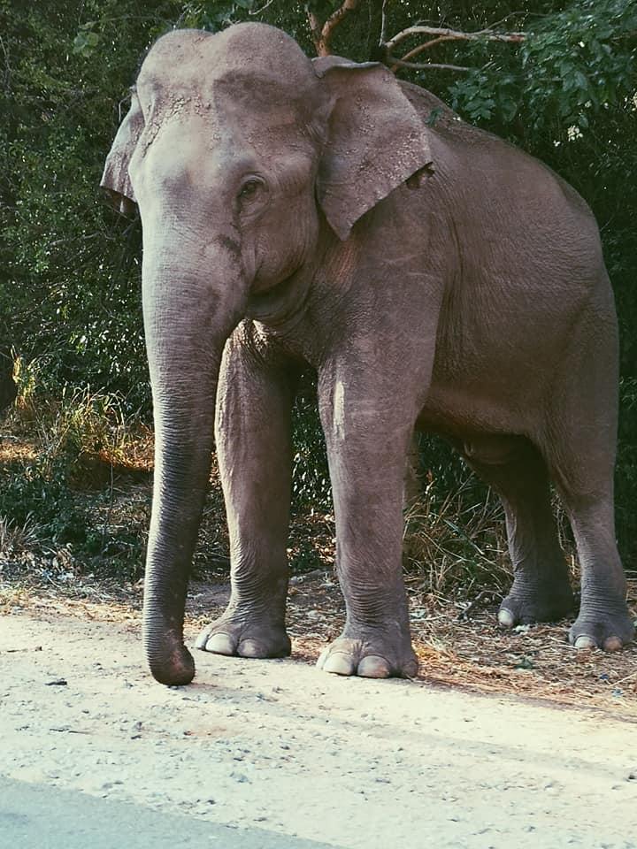 invite-to-paradise-sri-lanka-holiday-honeymoon-specialists-customer-feedback-elin-jordan-luce-elephant-wild.jpg