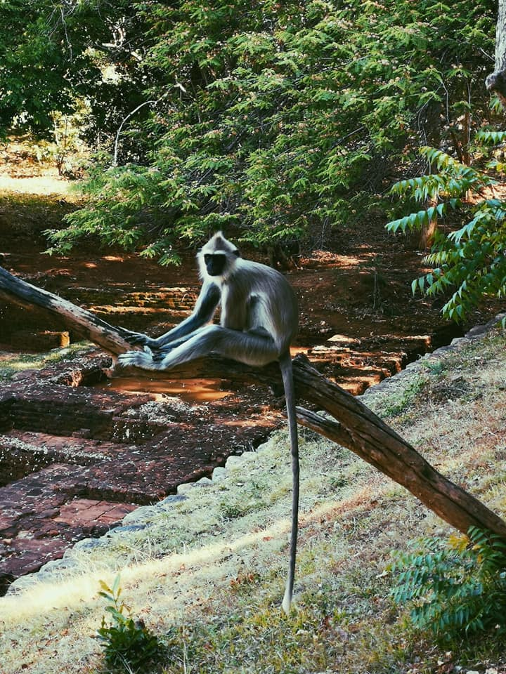 invite-to-paradise-sri-lanka-holiday-honeymoon-specialists-customer-feedback-elin-jordan-luce-monkey.jpg