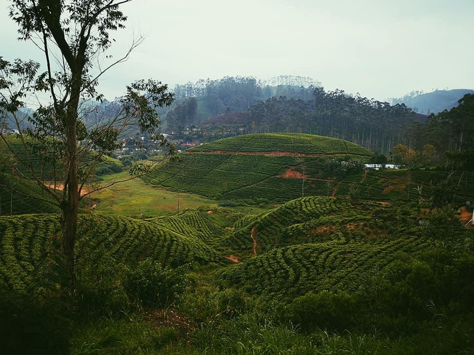 invite-to-paradise-sri-lanka-holiday-honeymoon-specialists-customer-feedback-elin-jordan-luce-tea-plantations.jpg
