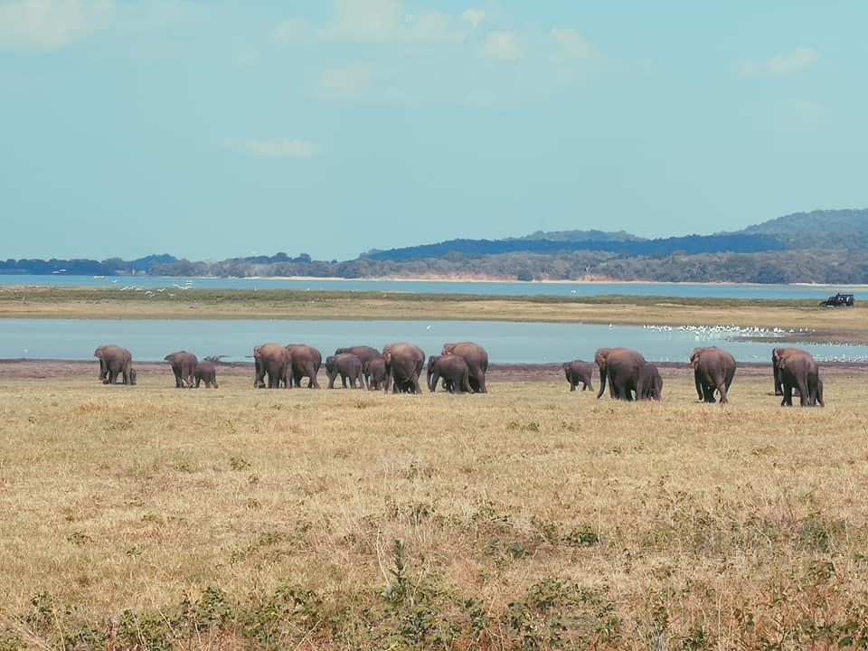invite-to-paradise-sri-lanka-holiday-honeymoon-specialists-customer-feedback-elin-jordan-luce-wildlife-safari-elephants-minneriya.jpg