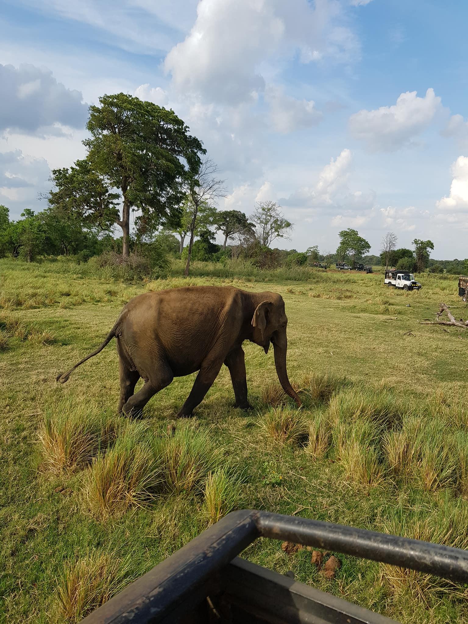 invite-to-paradise-sri-lanka-maldives-holiday-honeymoon-specialists-customer-guest-feedback-zane-lisa-butcher-wild-elephant-wildlife-safari-national-park.jpg