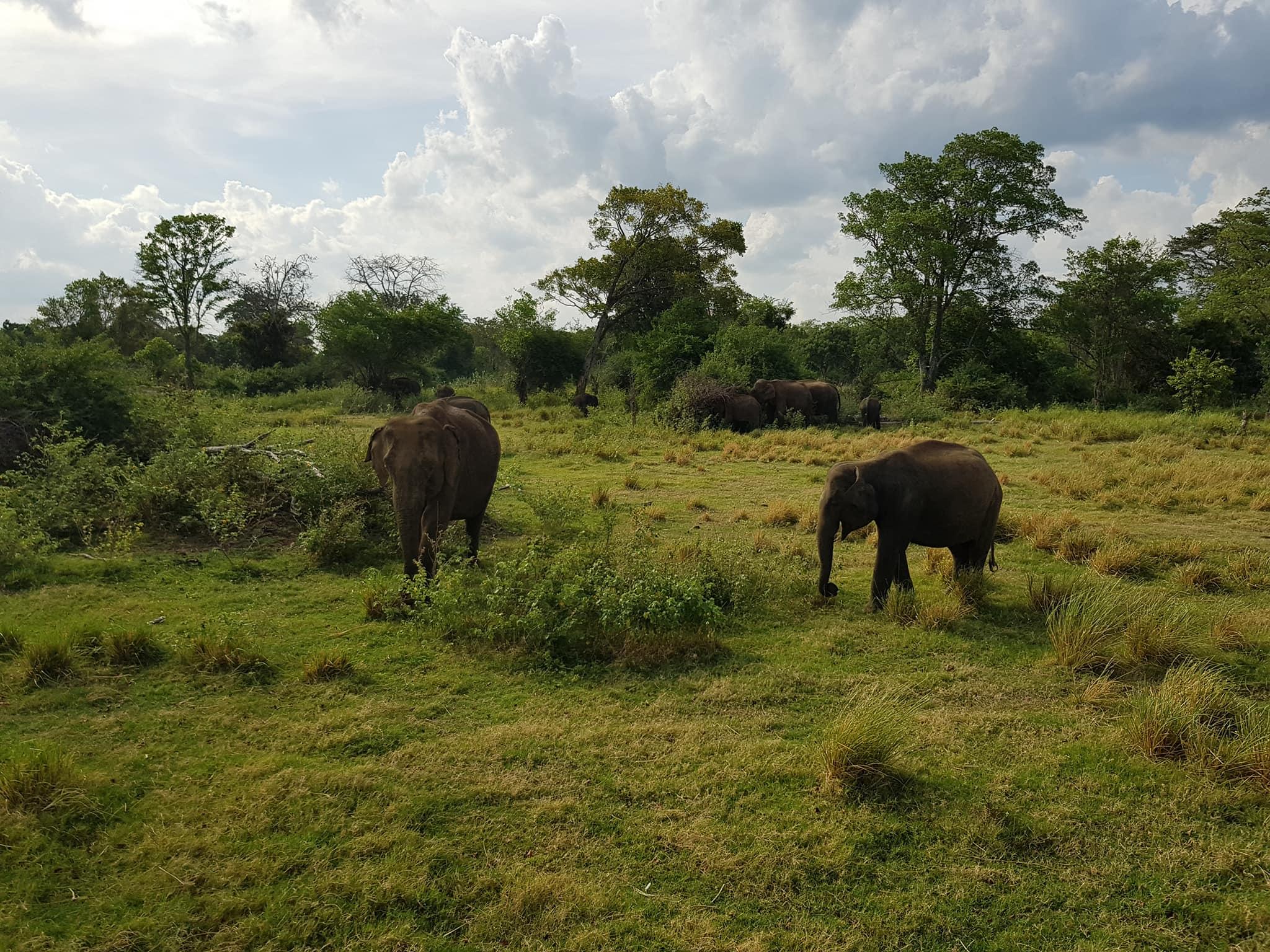 invite-to-paradise-sri-lanka-maldives-holiday-honeymoon-specialists-customer-guest-feedback-zane-lisa-butcher-wild-elephant-wildlife-safari-2.jpg