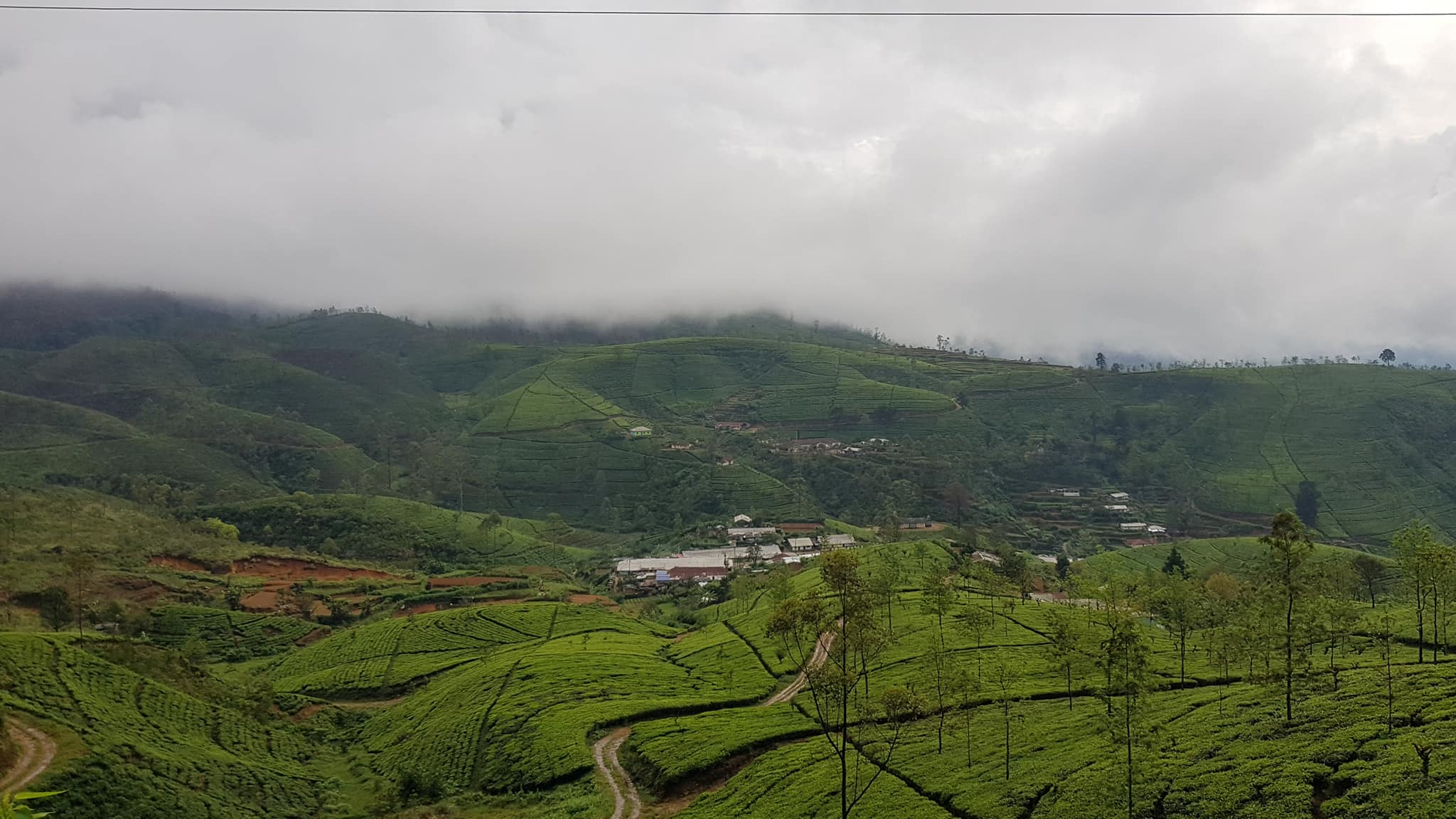 invite-to-paradise-sri-lanka-maldives-holiday-honeymoon-specialists-customer-guest-feedback-zane-lisa-butcher-98-acres-tea-plantation-hills.jpg