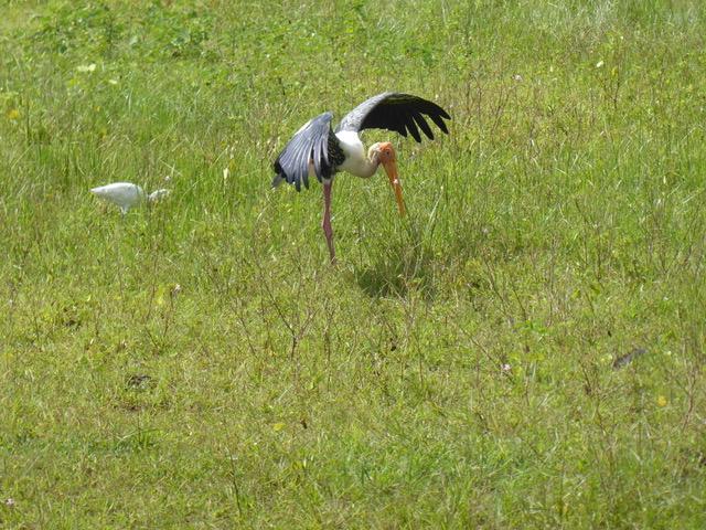 invite-to-paradise-sri-lanka-family-holiday-specialists-customer-feedback-pickering-bird-field.jpeg