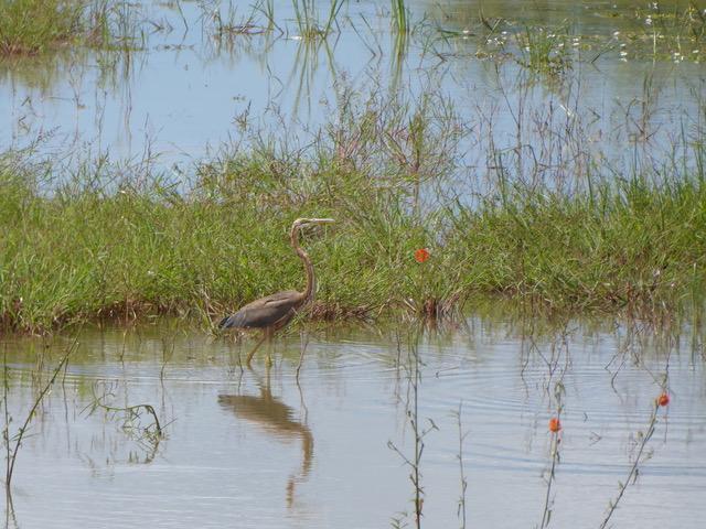 invite-to-paradise-sri-lanka-family-holiday-specialists-customer-feedback-pickering-bird-field-water.jpeg