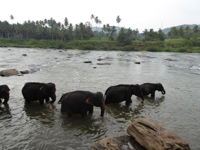 invite-to-paradise-sri-lanka-family-holiday-specialists-customer-feedback-pickering-elephant-sanctuary.jpeg