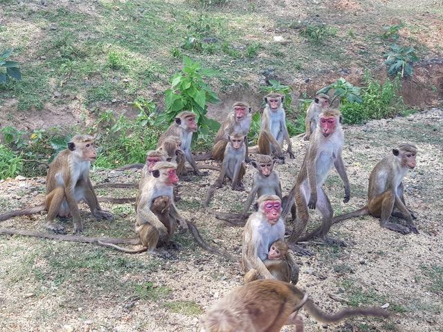 invite-to-paradise-sri-lanka-family-holiday-specialists-customer-feedback-pickering-monkeya.jpeg