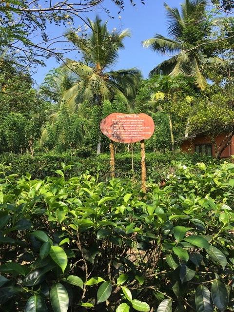 invite-to-paradise-sri-lanka-family-holiday-specialists-customer-feedback-pickering-tea-plantation.jpeg