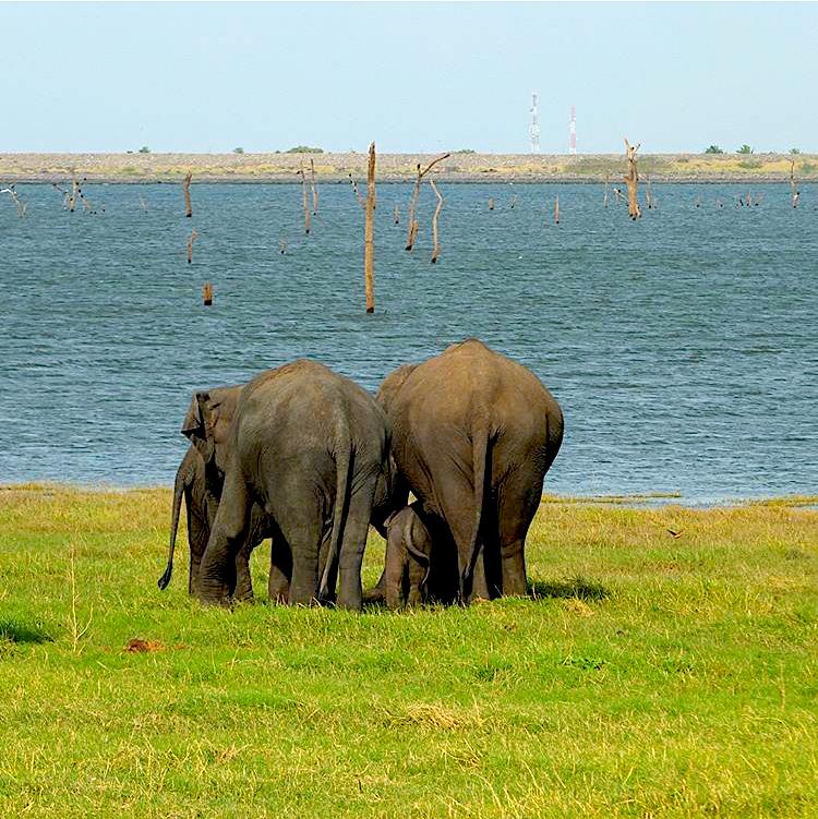 invite-to-paradise-sri-lanka-maldives-holiday-honeymoon-specialists-customer-feedback-edward-bethan-elephant-wildlife-jeep-safari-4.PNG