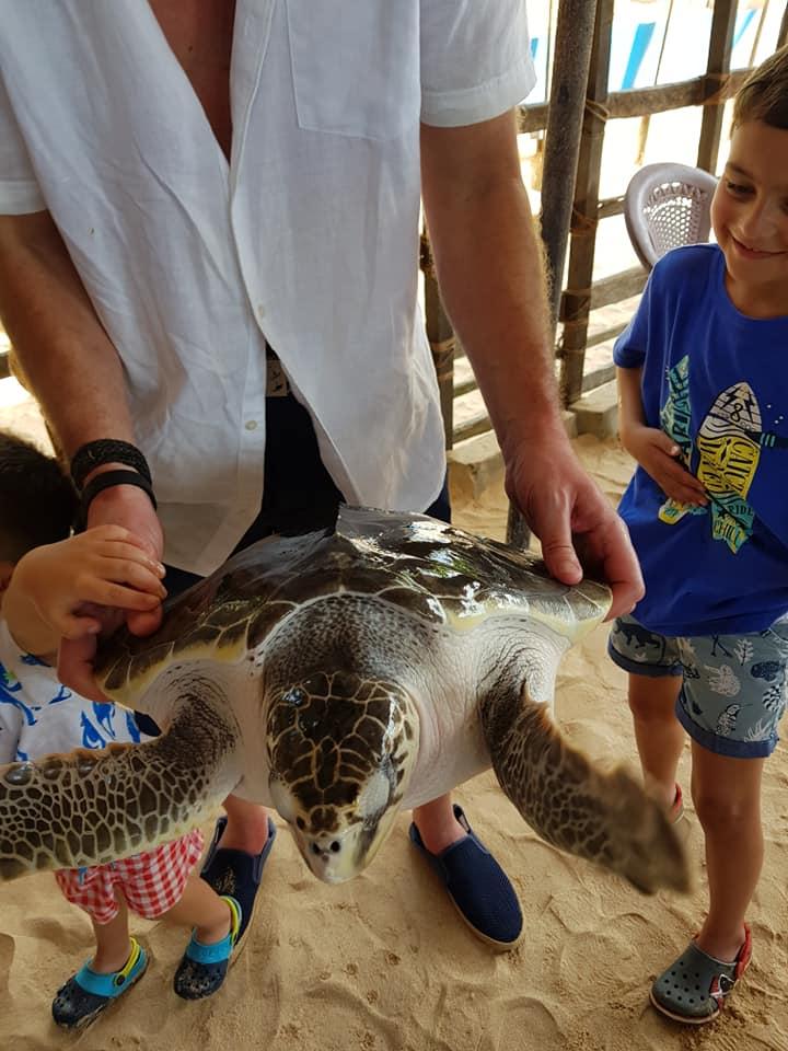 invite-to-paradise-sri-lanka-maldives-family-holiday-specialists-customer-feedback-scott-leanne-odell-sea-turtle-1.jpg