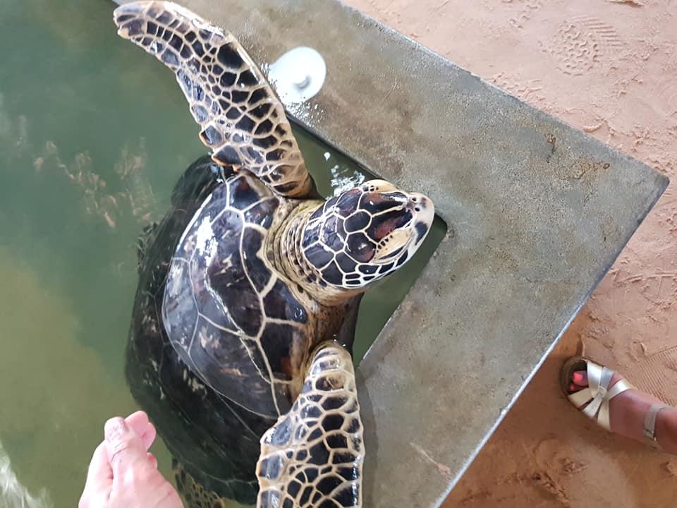 invite-to-paradise-sri-lanka-maldives-family-holiday-specialists-customer-feedback-scott-leanne-odell-sea-turtle-3.jpg