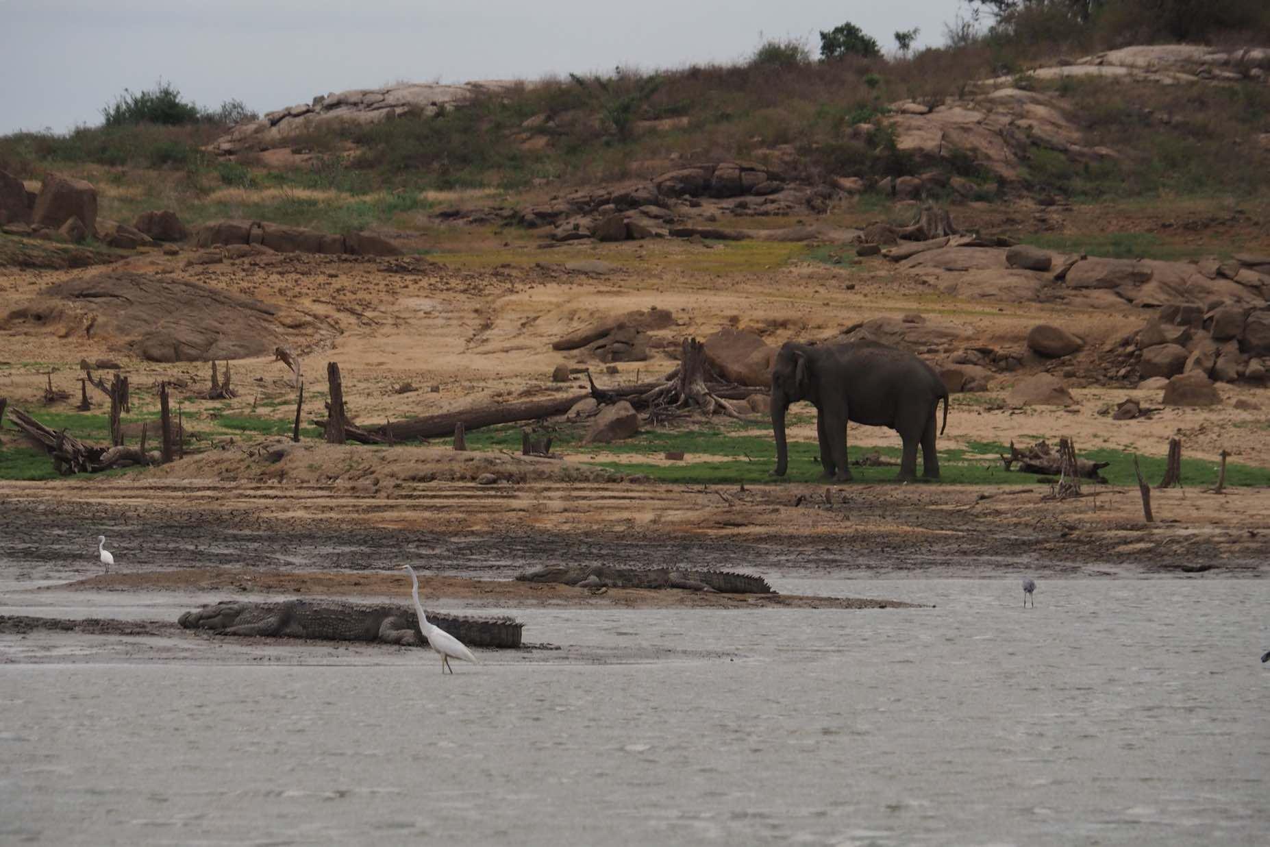 sri-lanka-gal-oya-boat-safari-holiday-review-feedback-invite-to-paradise-quentin-kate-hulm.jpg