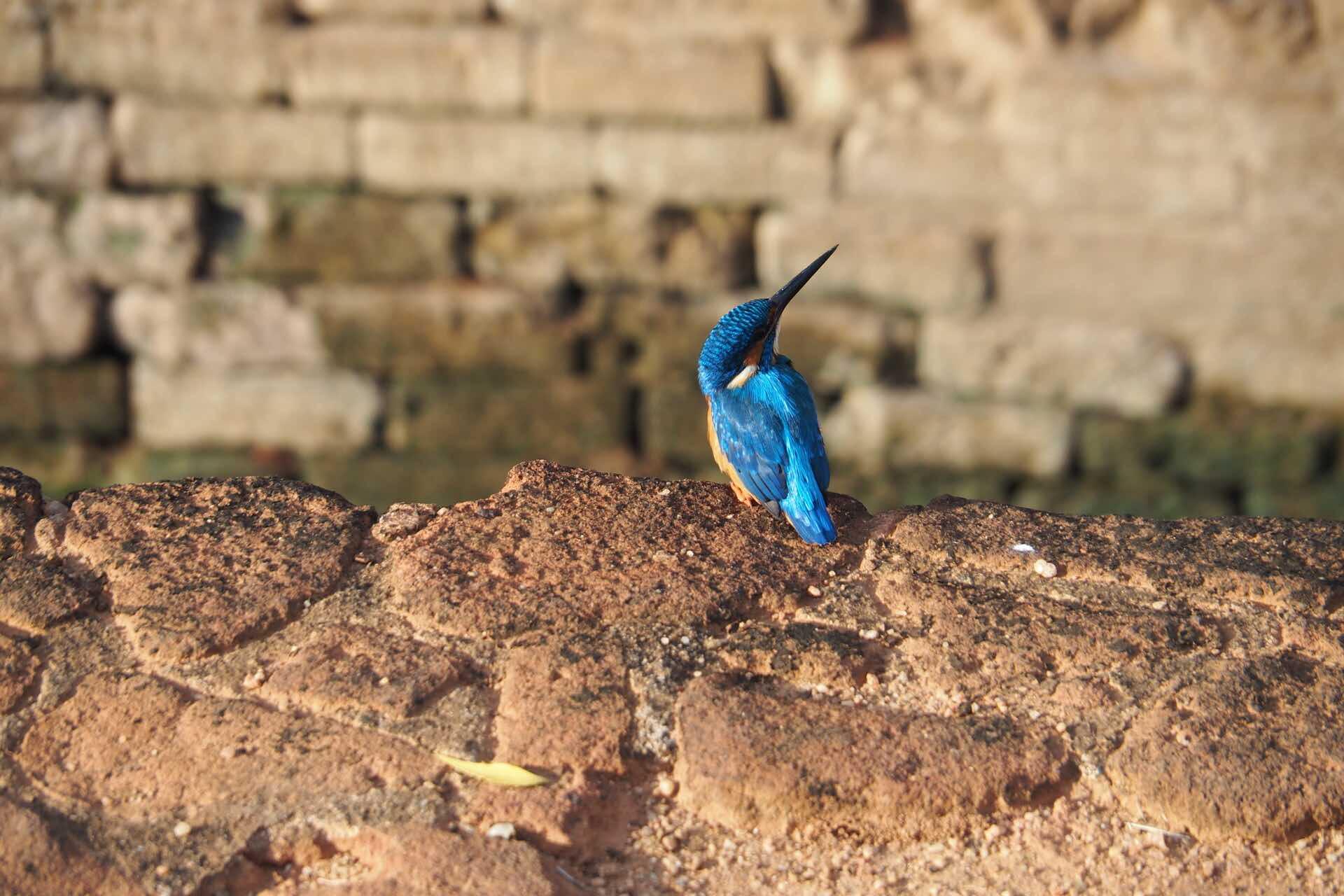 sri-lanka-kingfisher-bird-holiday-review-feedback-invite-to-paradise-quentin-kate-hulm.jpg
