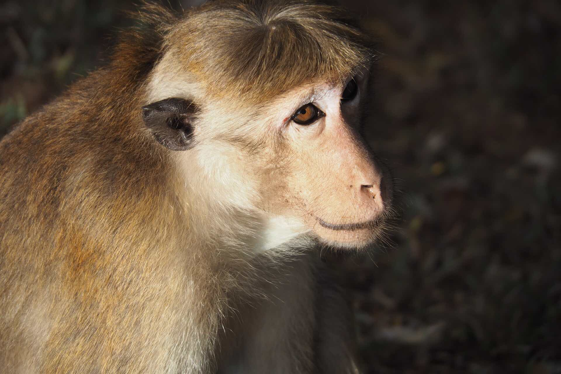 sri-lanka-monkey-holiday-review-feedback-invite-to-paradise-quentin-kate-hulm.jpg