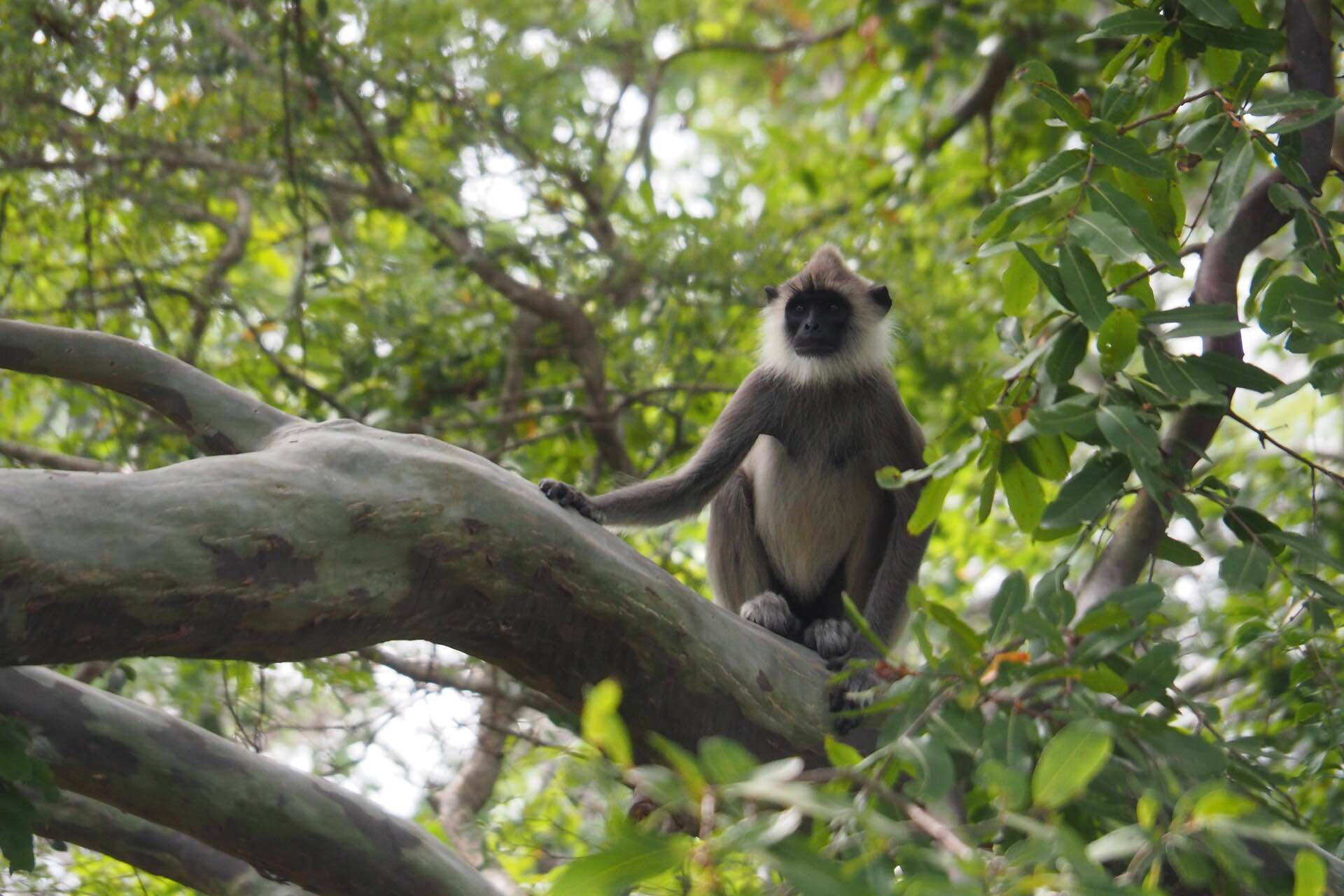sri-lanka-monkey-tree-holiday-review-feedback-invite-to-paradise-quentin-kate-hulm.jpg