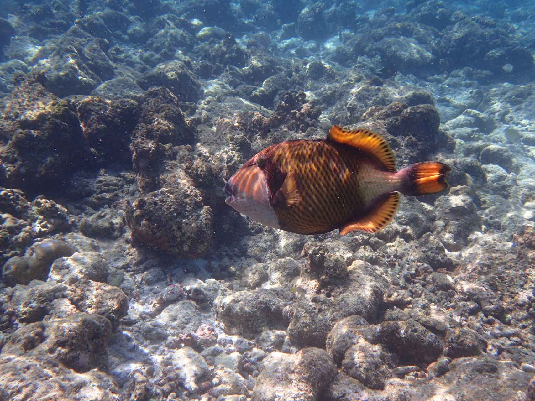 maldives-oblu-by-atmosphere-at-helengeli-house-reef-holiday-review-feedback-invite-to-paradise-quentin-kate-hulm.jpg