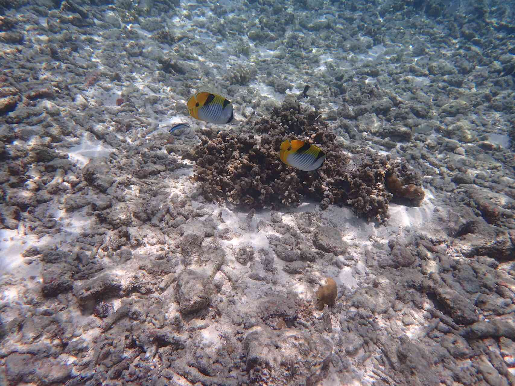 maldives-oblu-by-atmosphere-at-helengeli-reef-fish-snorkle-holiday-review-feedback-invite-to-paradise-quentin-kate-hulm.jpg