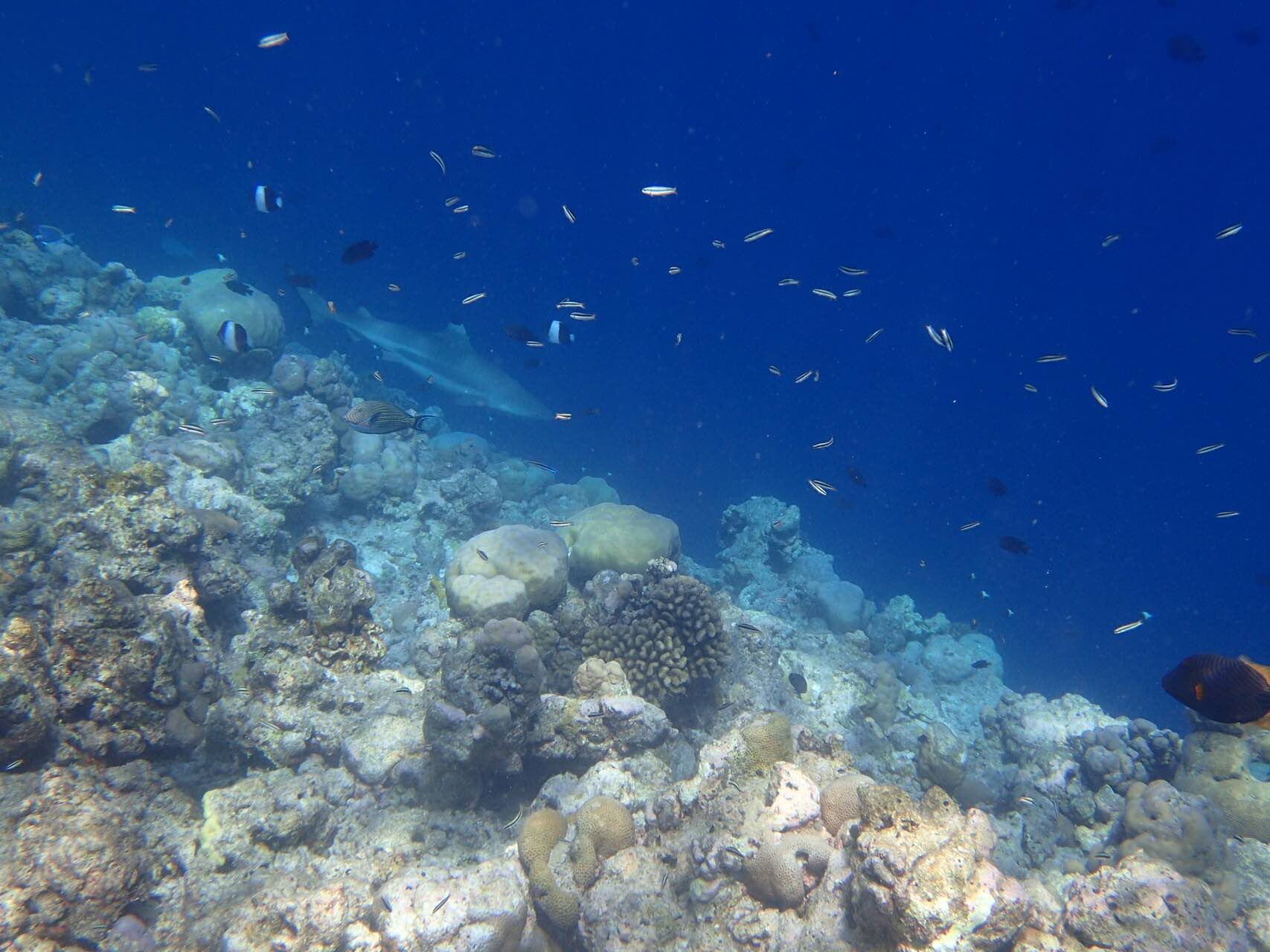 maldives-oblu-by-atmosphere-at-helengeli-reef-shark-fish-holiday-review-feedback-invite-to-paradise-quentin-kate-hulm.jpg