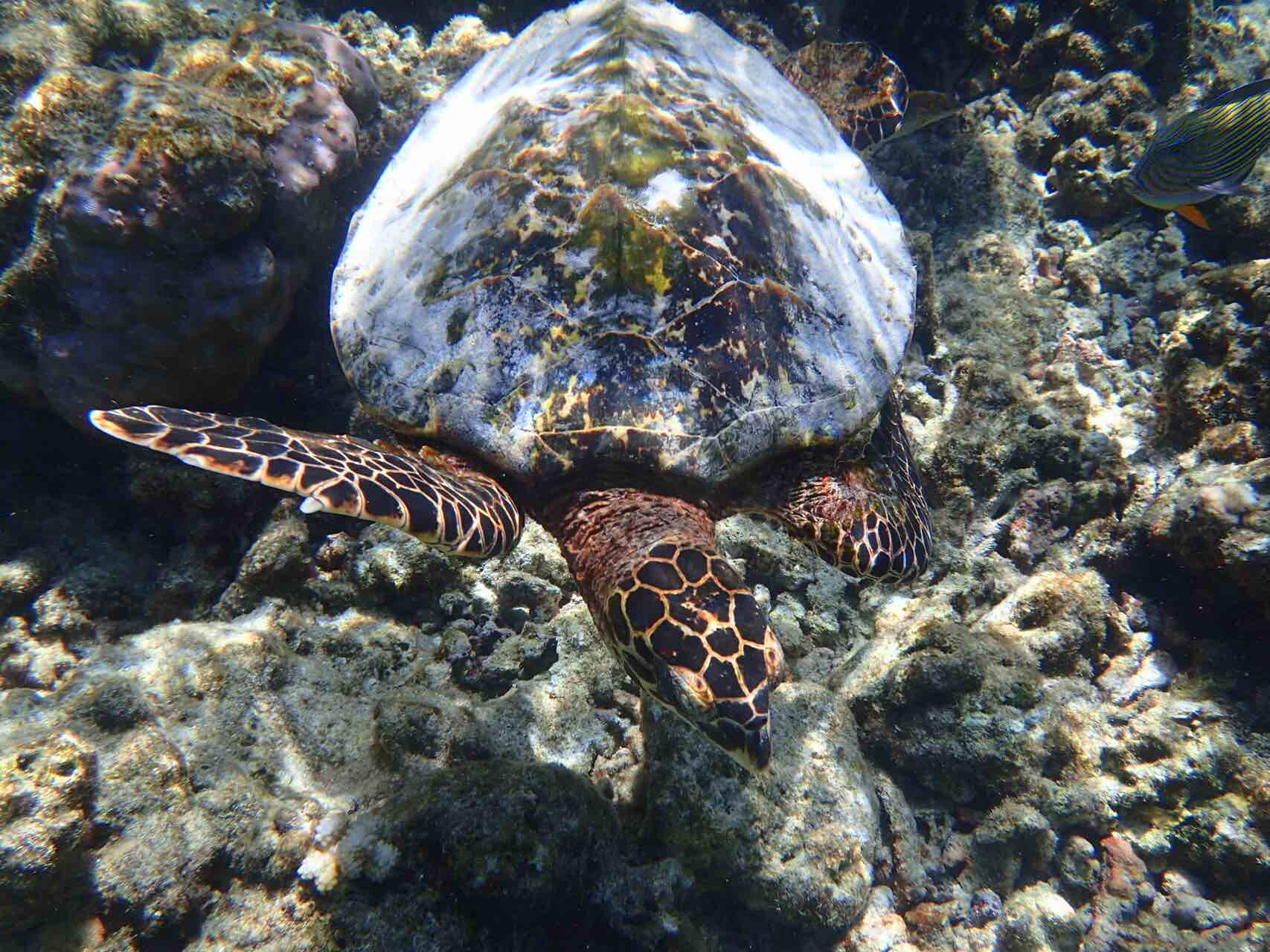 maldives-oblu-by-atmosphere-at-helengeli-sea-turtle-holiday-review-feedback-invite-to-paradise-quentin-kate-hulm.jpg