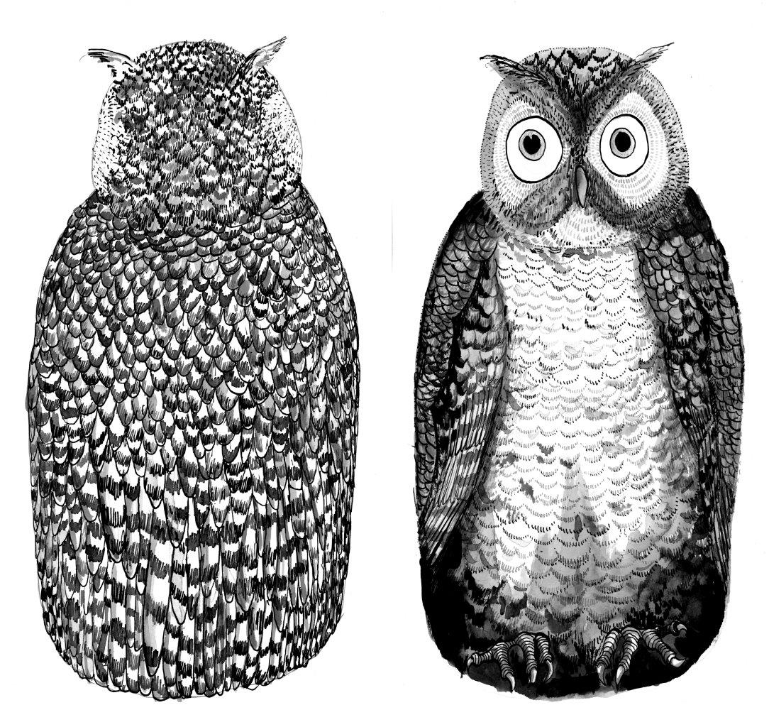 OWL (2).jpg
