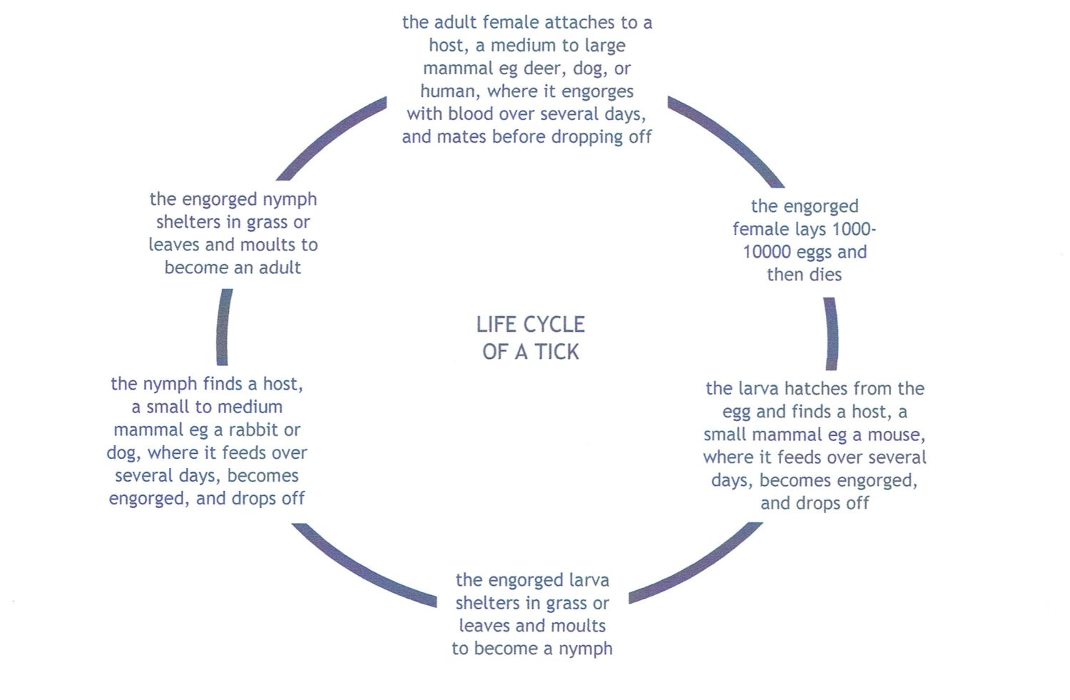 life cycle of a tick cropped 1500px.jpg
