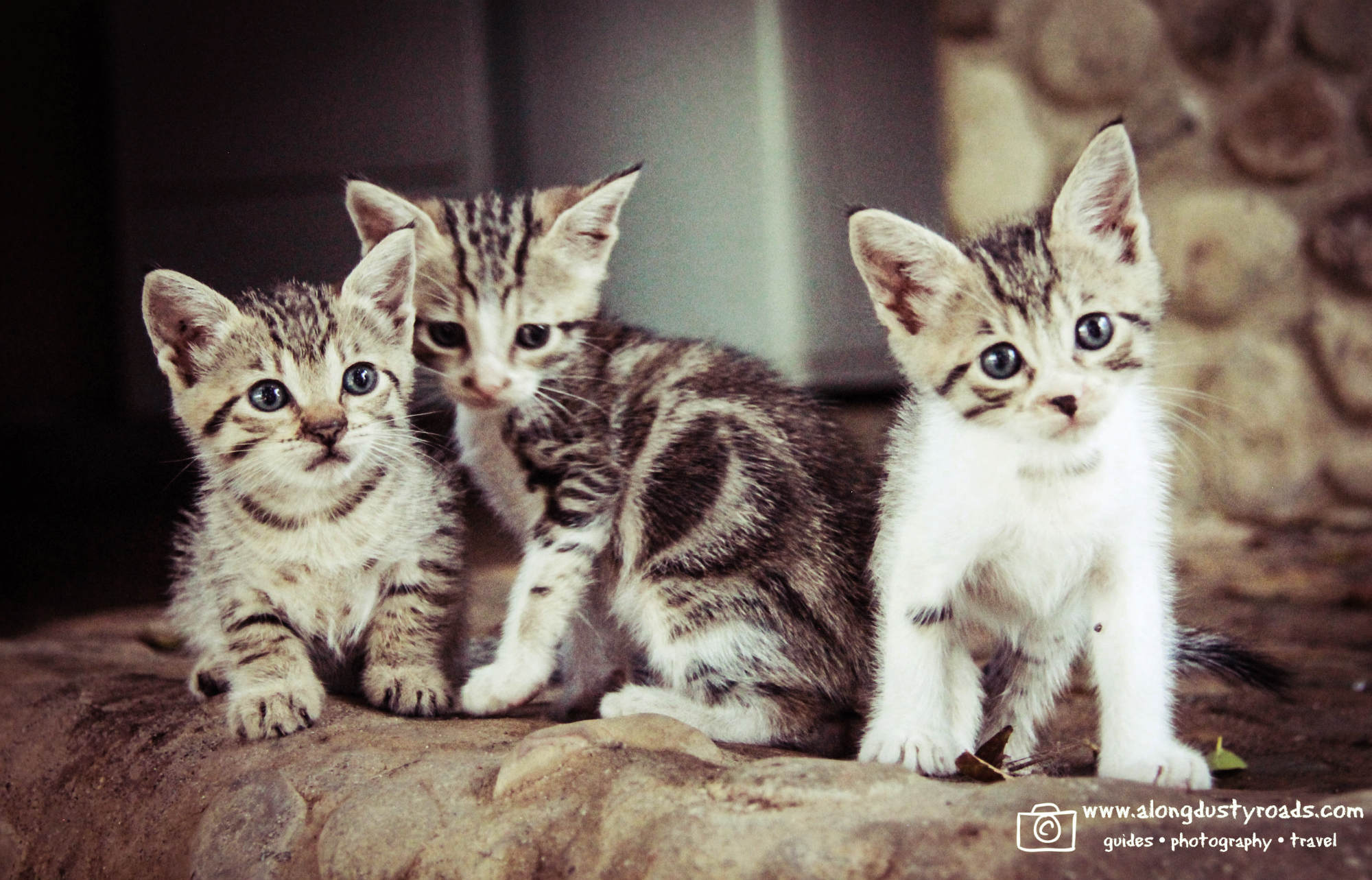 kittens.popoyo.nicaragua.nicawaves