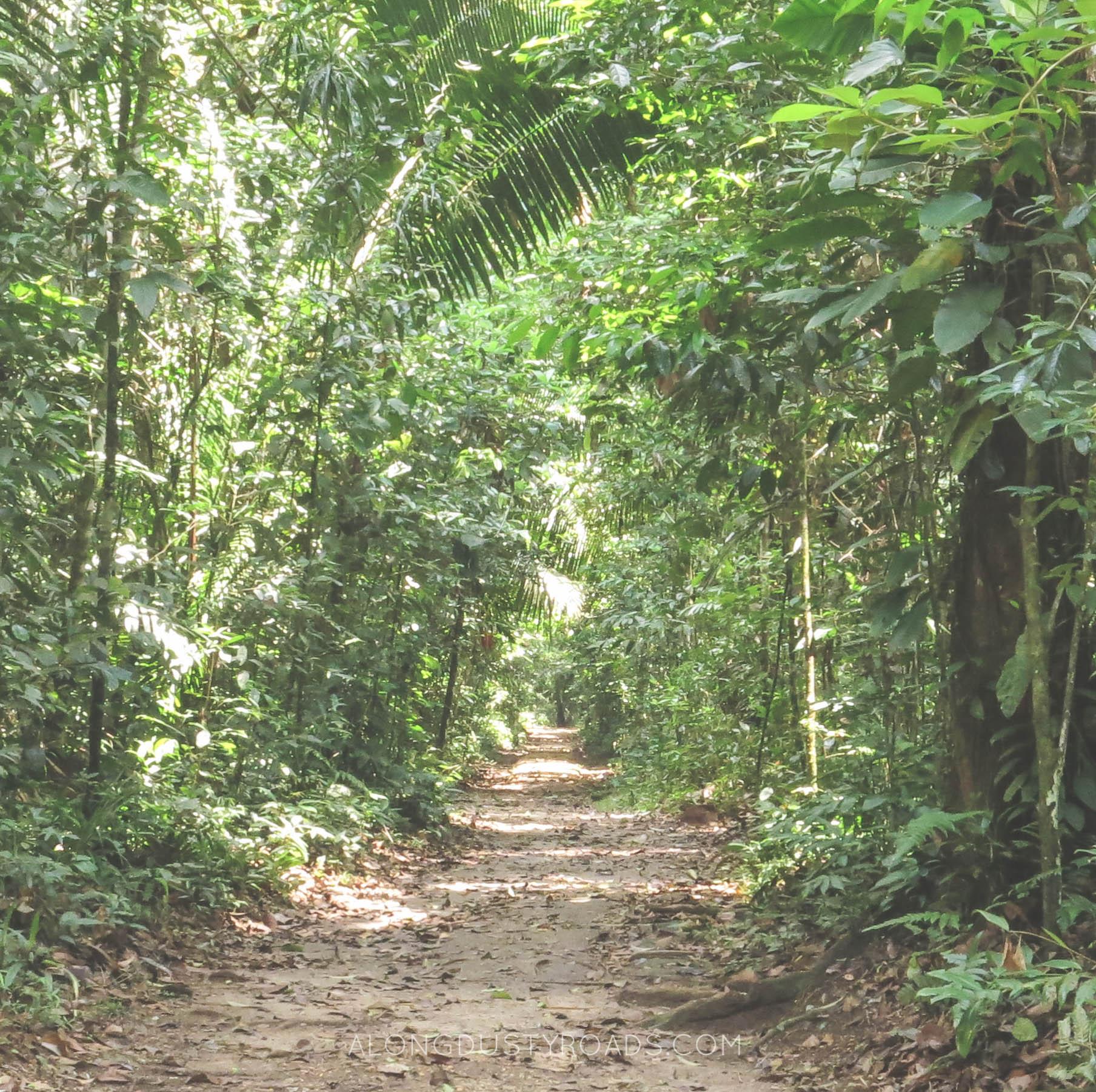 laguna lachua rainforest