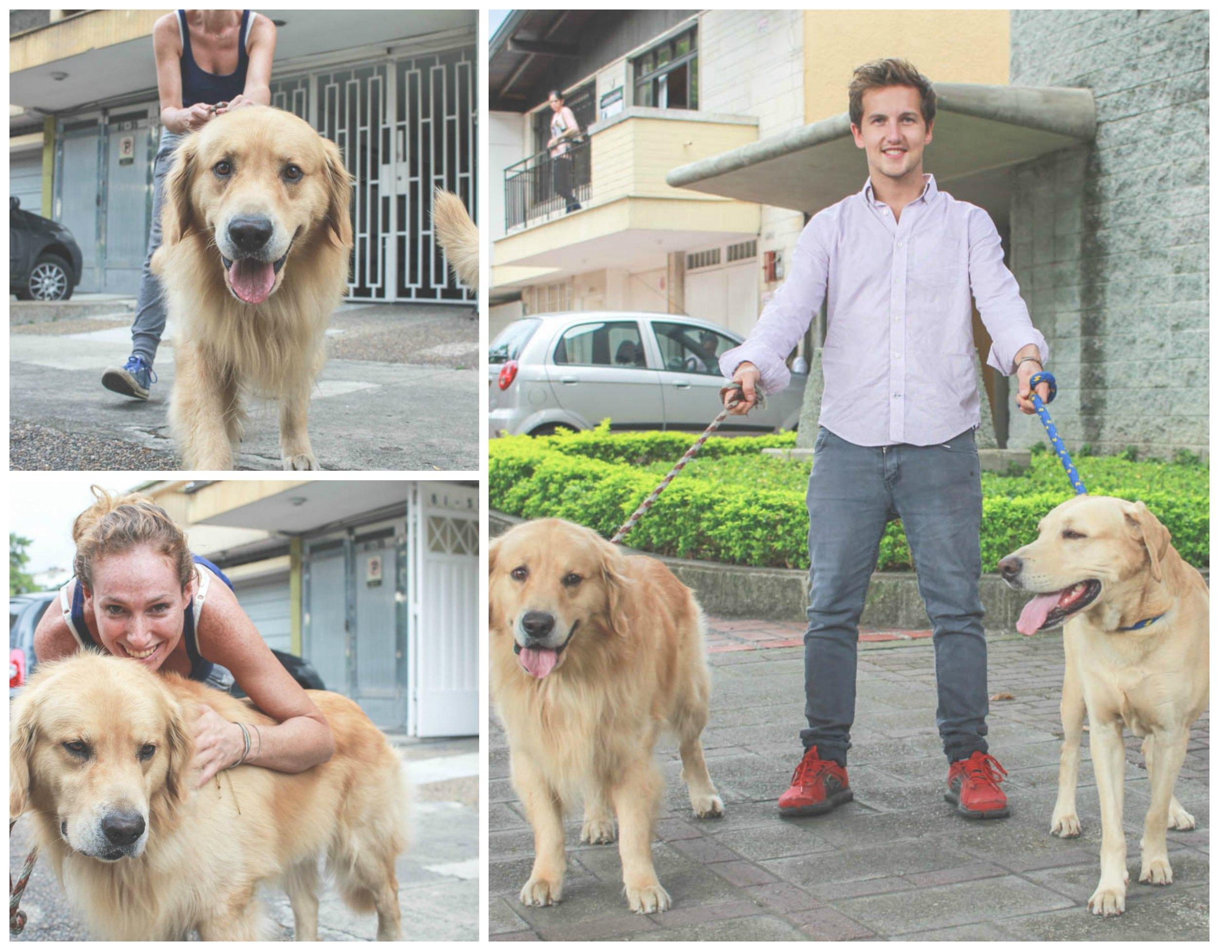 dog walking collage