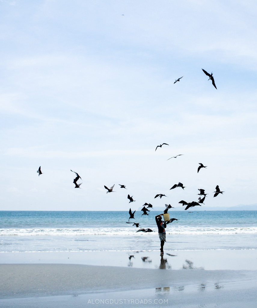 the fisherman and the birds