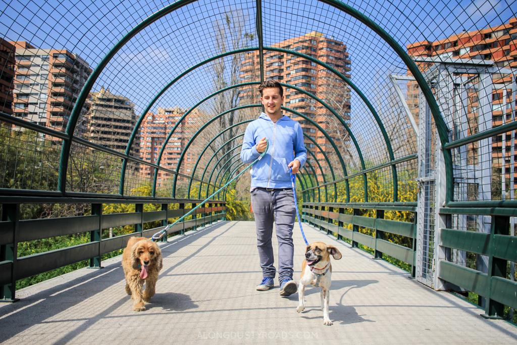 Walking the dogs in Vitacura, Santiago
