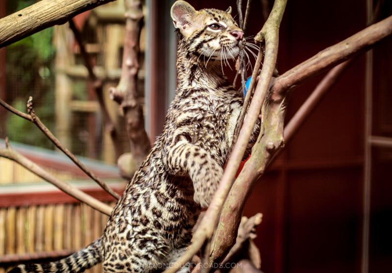 Jaguar Rescue Centre - Puerto Viejo, Costa Rica