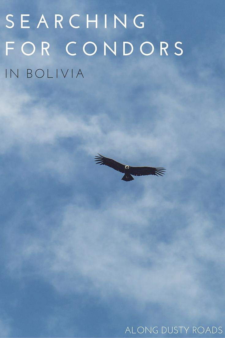 我们踏上了一段不寻常的旅程,试图在玻利维亚找到秃鹰——我们发现这是你在这个国家能拥有的最神奇的经历之一。点击大头针了解更多信息。