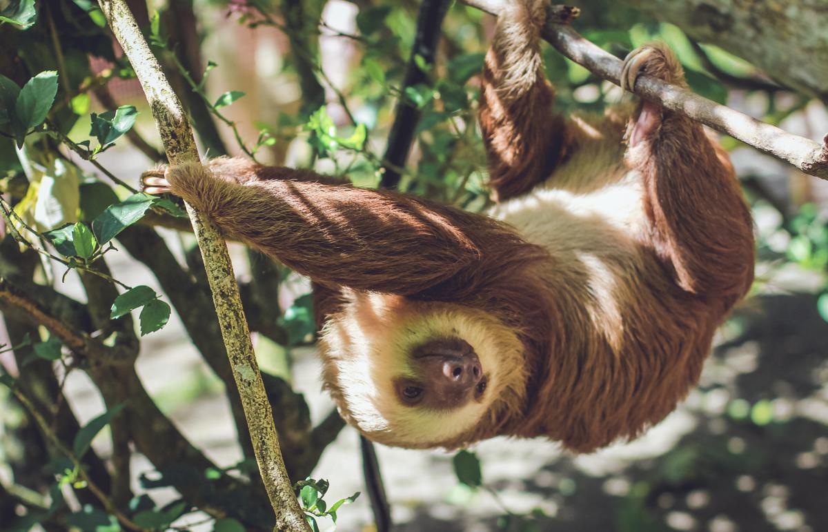 Things to do in Santa Cruz, Bolivia - Visit the Botanical Gardens