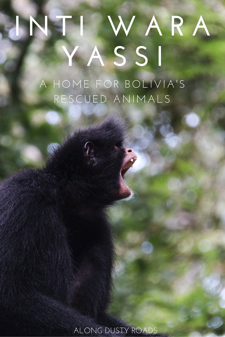 Looking to volunteer in Bolivia and make a real difference to the lives of mistreated animals? Inti Wara Yassi may be just the place! Click on the pin to discover more about the amazing work carried out in Bolivia's jungles.
