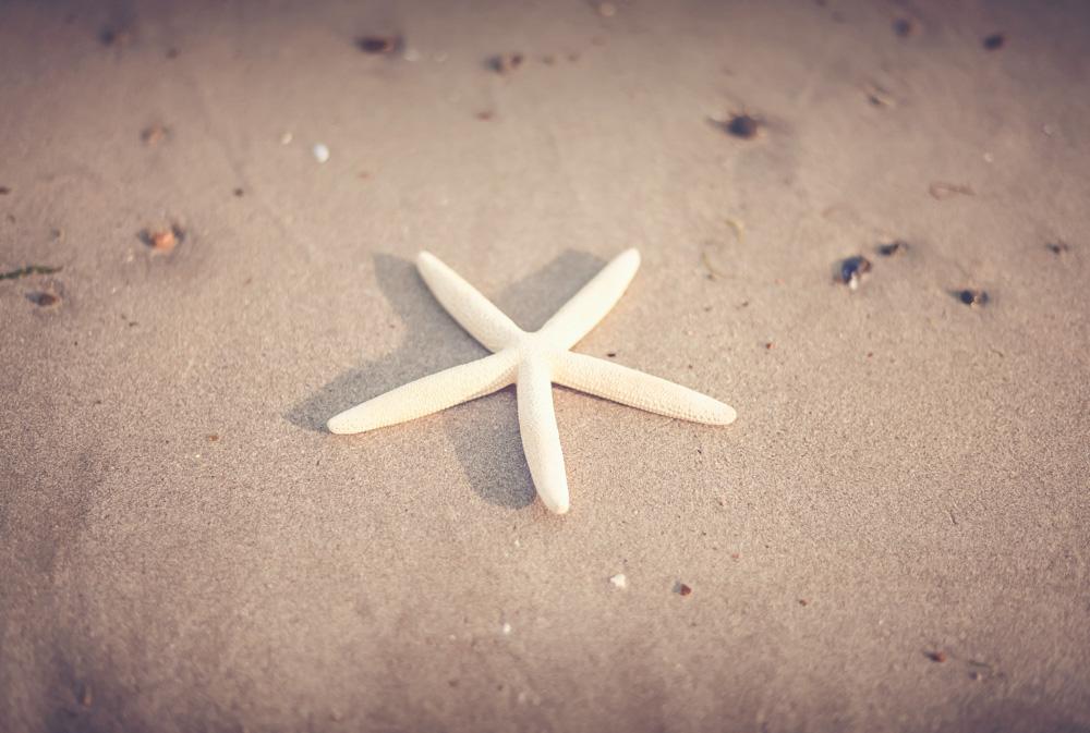 starfish-1081931.jpg